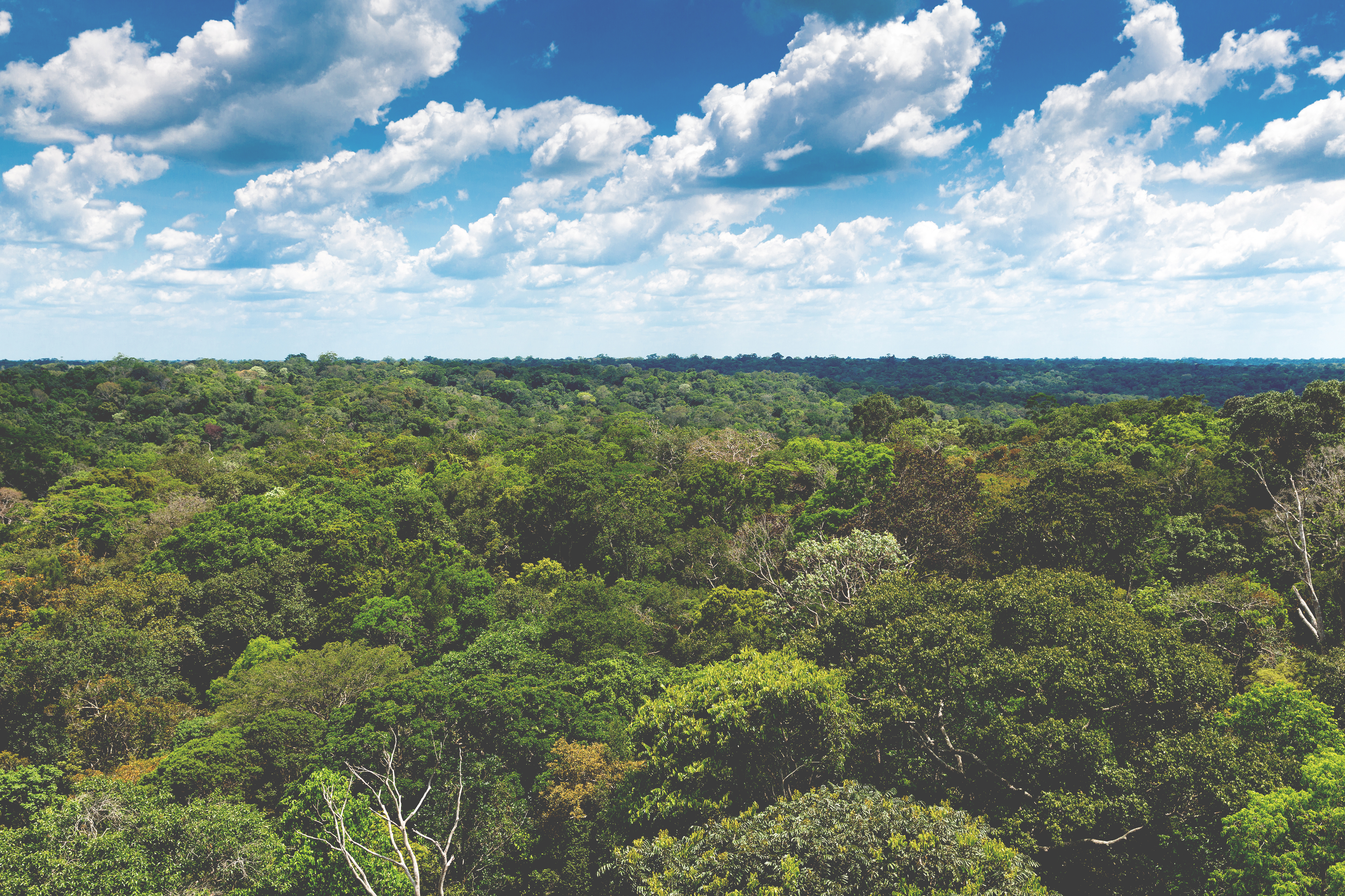 Besafe have helped plant 500 trees in the Amazon Rainforest